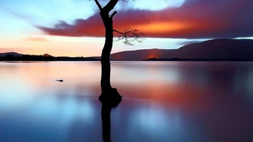 arbre de vie coaching hypnose bordeaux